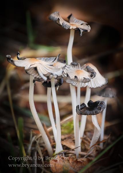 Image of Fungi & Lichen