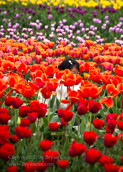 Image of Hiding in the tulips