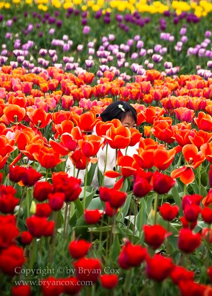 Image of Wooden Shoe Tulip Farm, Oregon