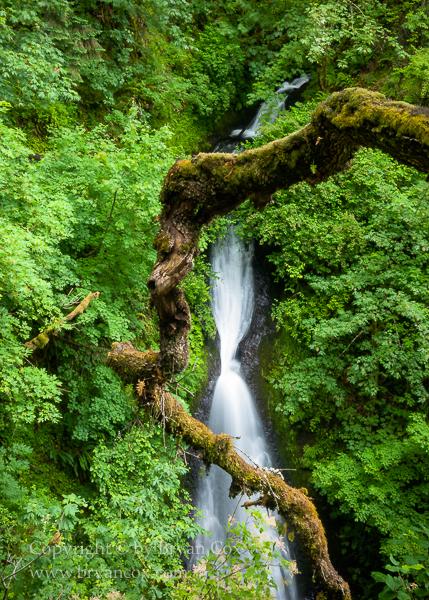 Image of Shepherd's Dell Falls
