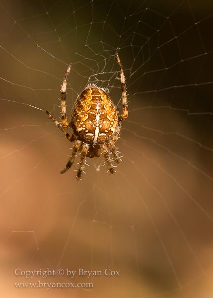 Image of Arachnids