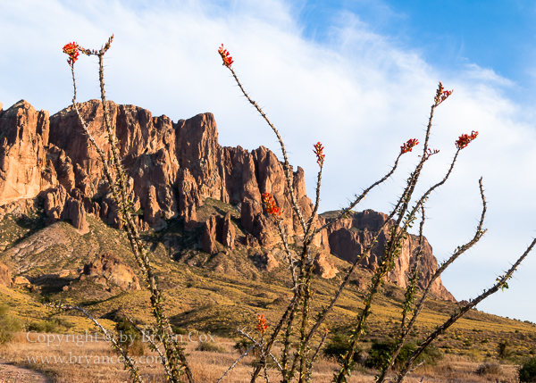 Image of Ocotillo on Superstition Mountain