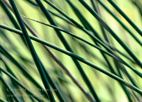 Image of Reeds