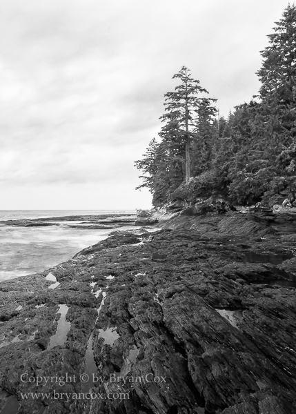 Image of Botanical Beach