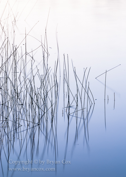 Image of Reeds on Lake Penland