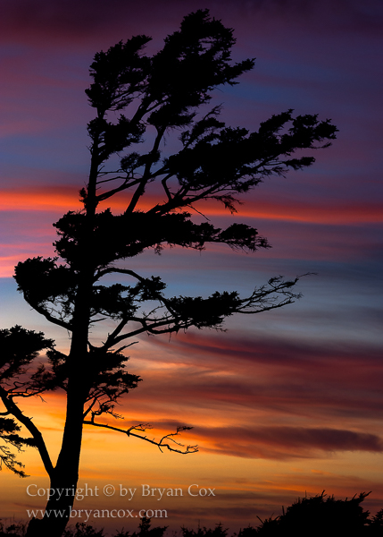 Image of Ecola sunset