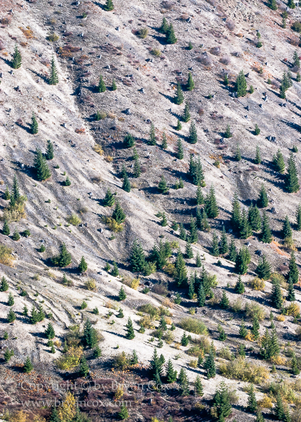 Image of New growth on the slopes of Mount St. Helens