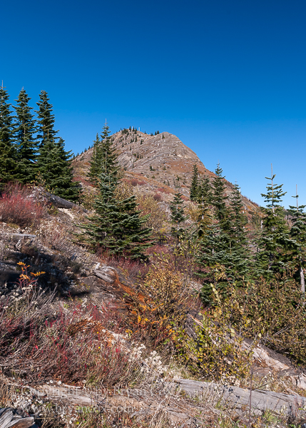 Image of Fall colors amid the log-strewn slopes of Mount St. Helens
