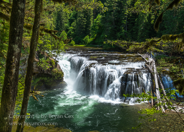 Image of Lower Lewis River Falls